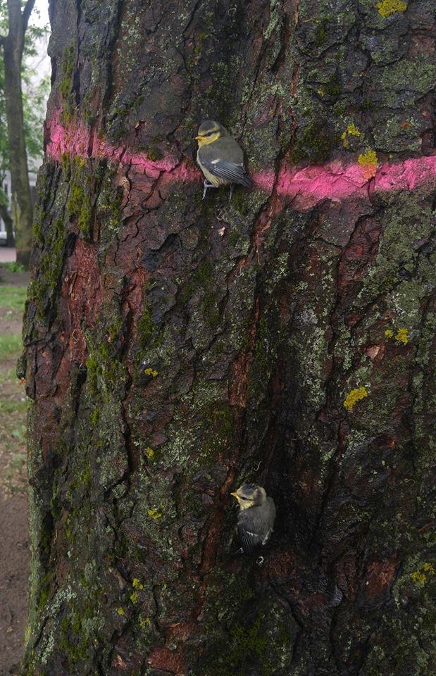 Kirtimui pažymėti medžiai
