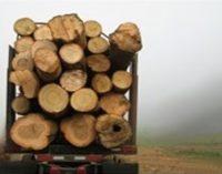 STT: Vyriausybė, keisdama medienos pardavimo taisykles, sudarytų sąlygas stambiesiems perdirbėjams spekuliuoti mediena