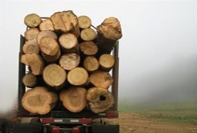 Vilkikais vežama mediena