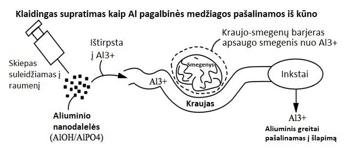 Klaidingas supratimas, kaip Al pagalbinės medžiagos pašalinamos iš kūno