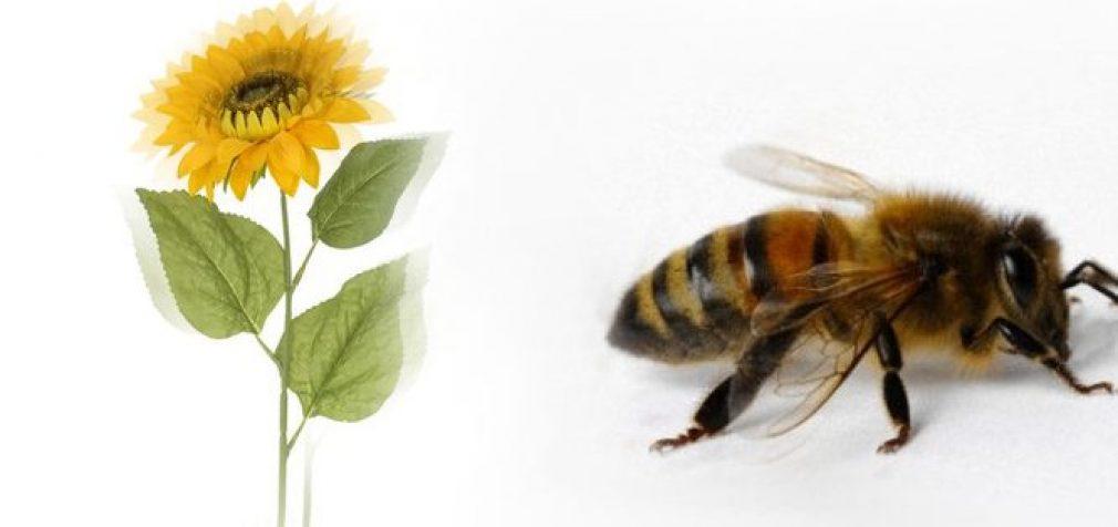 Nuodinga chemija – tai išmirimas – bitėms ir visai žmonijai