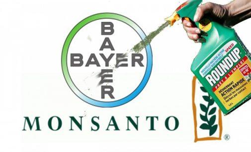Monsanto vykdo smegenų plovimą, pasinaudodama nupirkta interneto paieškos gigantės pagalba