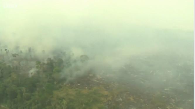 DEga Brazilijos miškai