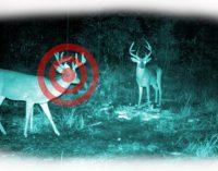 Aplinkos Ministerijoje vėl bandoma prastumti anksčiau atmestą naktinių taikiklių medžioklėje naudojimą