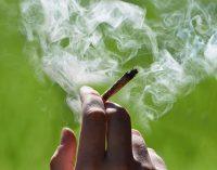 Marichuanos rūkymas daro poveikį susijusiam su autizmu genui spermoje