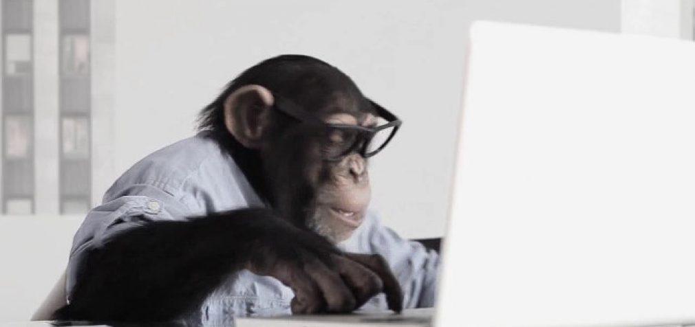 Beždžionės aplenkia žmogų kognityvinio lankstumo testuose