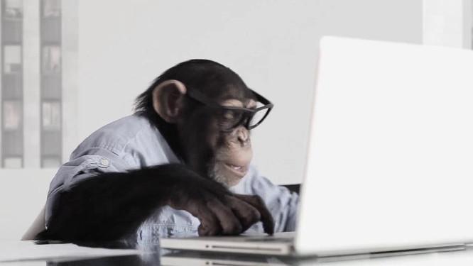 Beždžionė ir kompiuteris