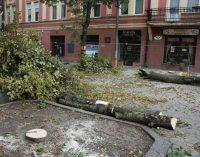 Teismo sprendimas – prie medžio prisirišusi moteris norėjo išsaugoti medžius