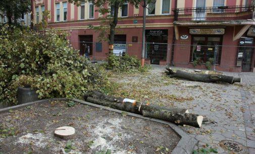 Teismas atsisakė stabdyti medžių kirtimą Šiauliuose
