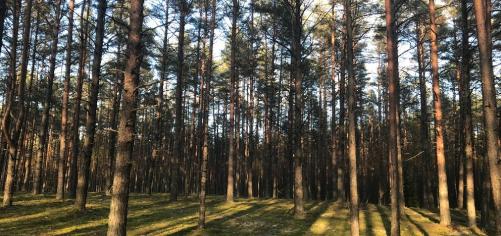 Atogrąžų stresas: Brazilijos miškai staiga ėmė skleisti, vietoje to, kad sugertų CO2