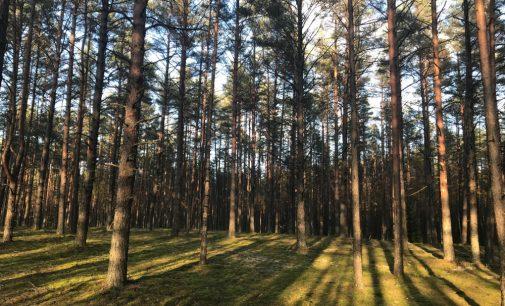 Anglies dioksidą uždrausta laidoti Žemės gelmėse