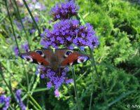 Nauji duomenys: vabzdžių skaičiaus mažėjimas yra rimtesnis nei manyta