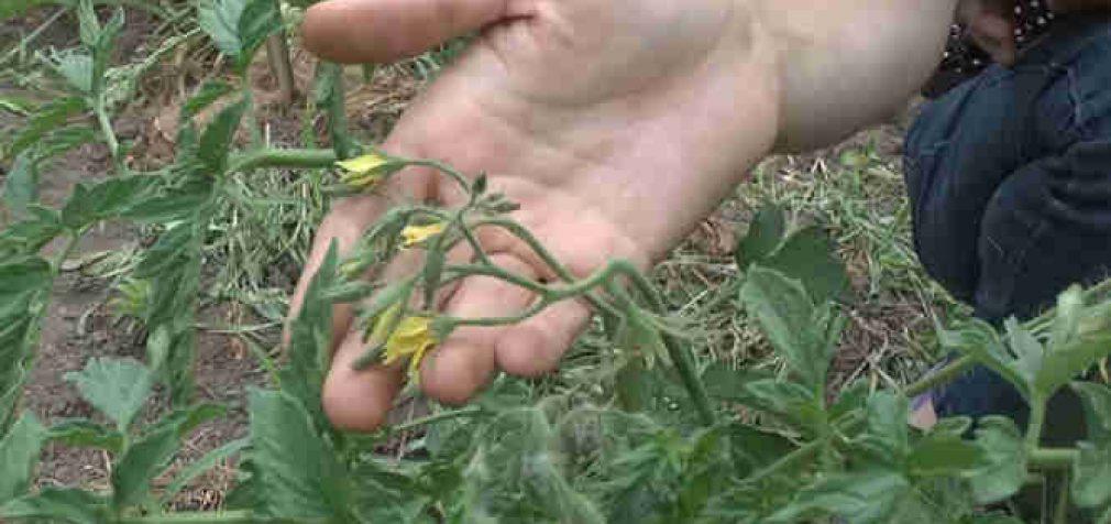 Augalai irgi jaučia skausmą įrodė mokslininkai