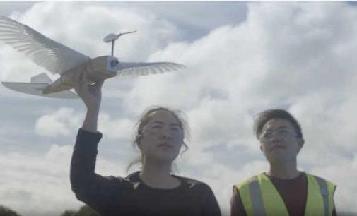 Amerikiečių inžinieriai pakartojo paukštį