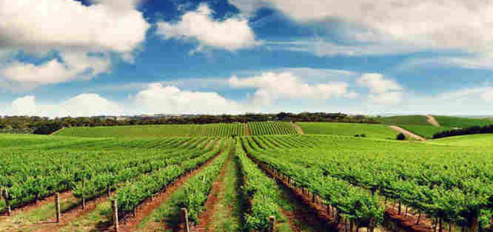 Daugiau ūkininkų gaus kompensacinius PVM priedus