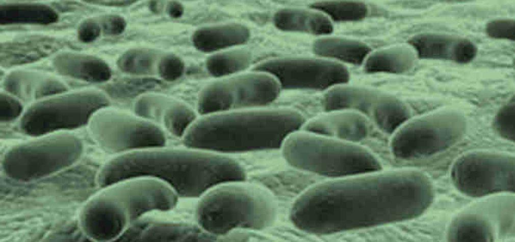 Dirbtinis intelektas atrado galingiausią antibiotiką viso tik per keletą valandų