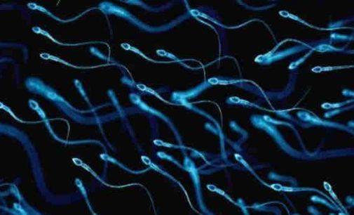 Kodėl krenta testosterono ir spermatozoidų kiekis pas vyrus Europoje ir Šiaurės Amerikoje