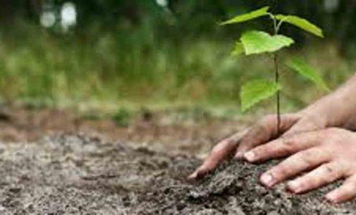 Pavasaris. Leista prekiauti sodinimui skirtais augalais, išduoti elektroninį parašą