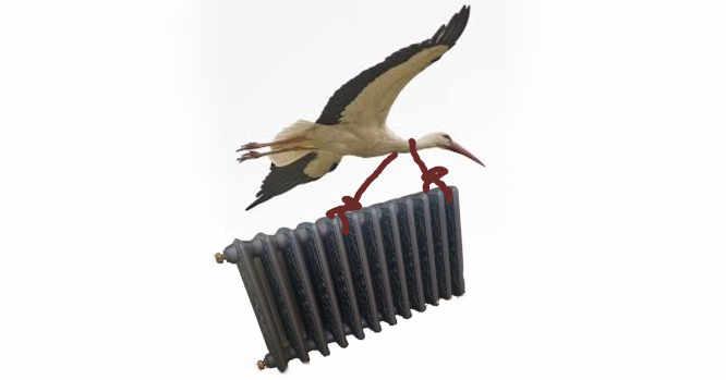 Gandras su radiatoriumi