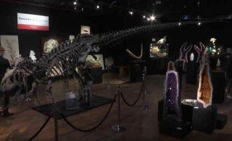 Trys milijonai dolerių už dinozauro skeletą